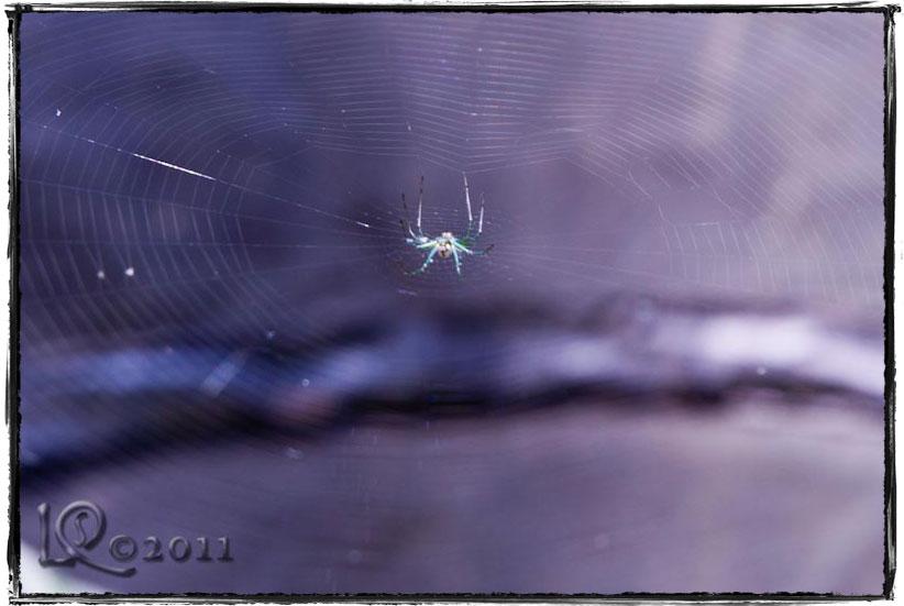 Spider, spider…