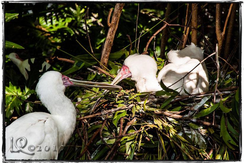 Nesting family…