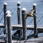 John's Pass Pier — Part 3