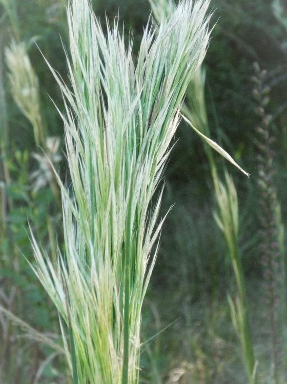 Weeds…