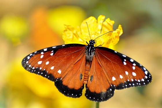 Butterfly House …