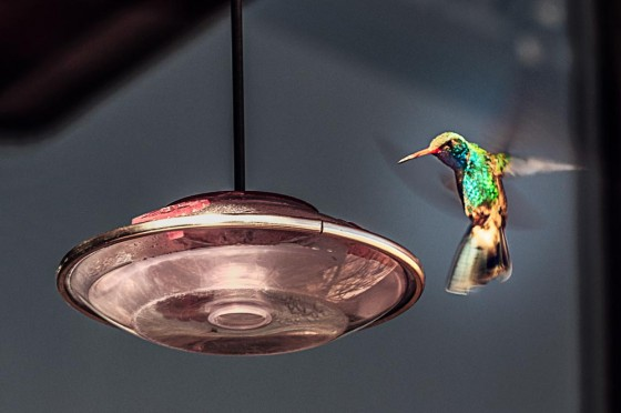 Hummingbird …